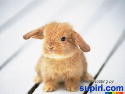 Wwwsupiricom funny baby animals screensaver amazing news - Free funny animal screensavers ...