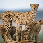 Amazing Wildlife - supiri.com