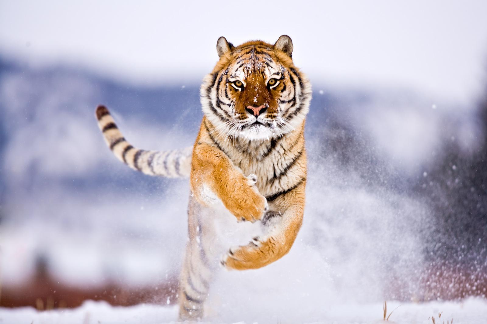 Amazing Wildlife   Ama...